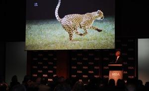 La belleza del guepardo (foto RBA, Alfredo Garófano)